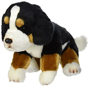 Amazon Com Nat And Jules Bernese Mountain Dog Black And Brown