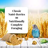 LAFEBER'S Classic Nutri-Berries Pet Bird Food, Made with Non-GMO and Human-Grade Ingredients, for Parakeets (Budgies), 4 lbs