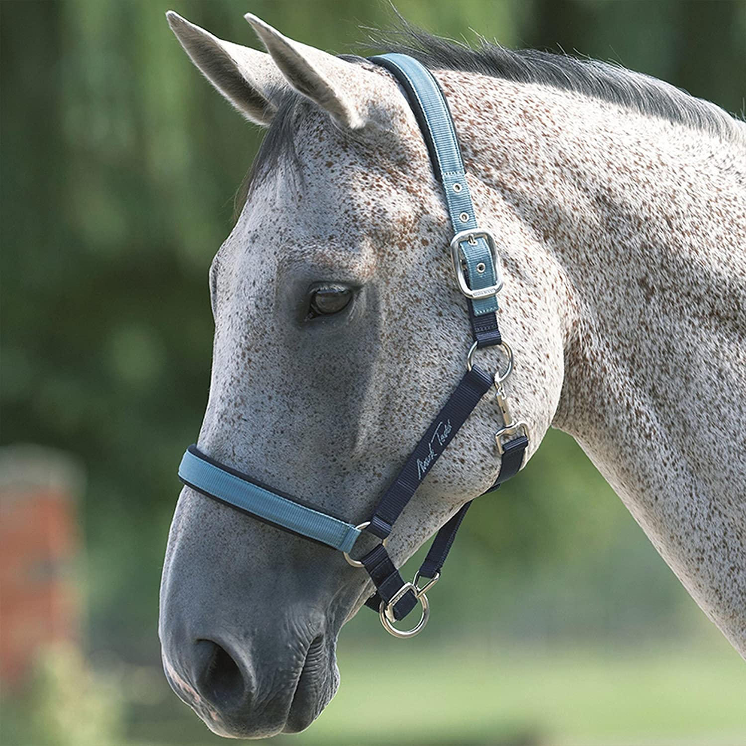 Mark Todd Deluxe Padded Headcollar With Lead Rope (UK Size  Cob) (Red)