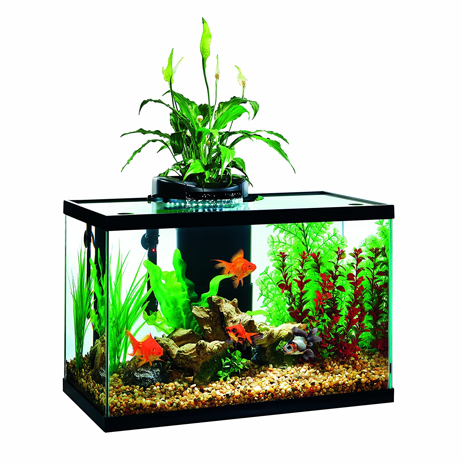Amazon Elive Aqua duo 20 gallon LED Kit Aquarium Starter Kits
