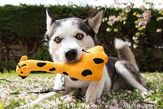 Beco Juguete Suave - George The Giraffe Hecho de Botellas de plástico Reciclado - Juguete para Perros con espátula: Amazon.es: Productos para mascotas