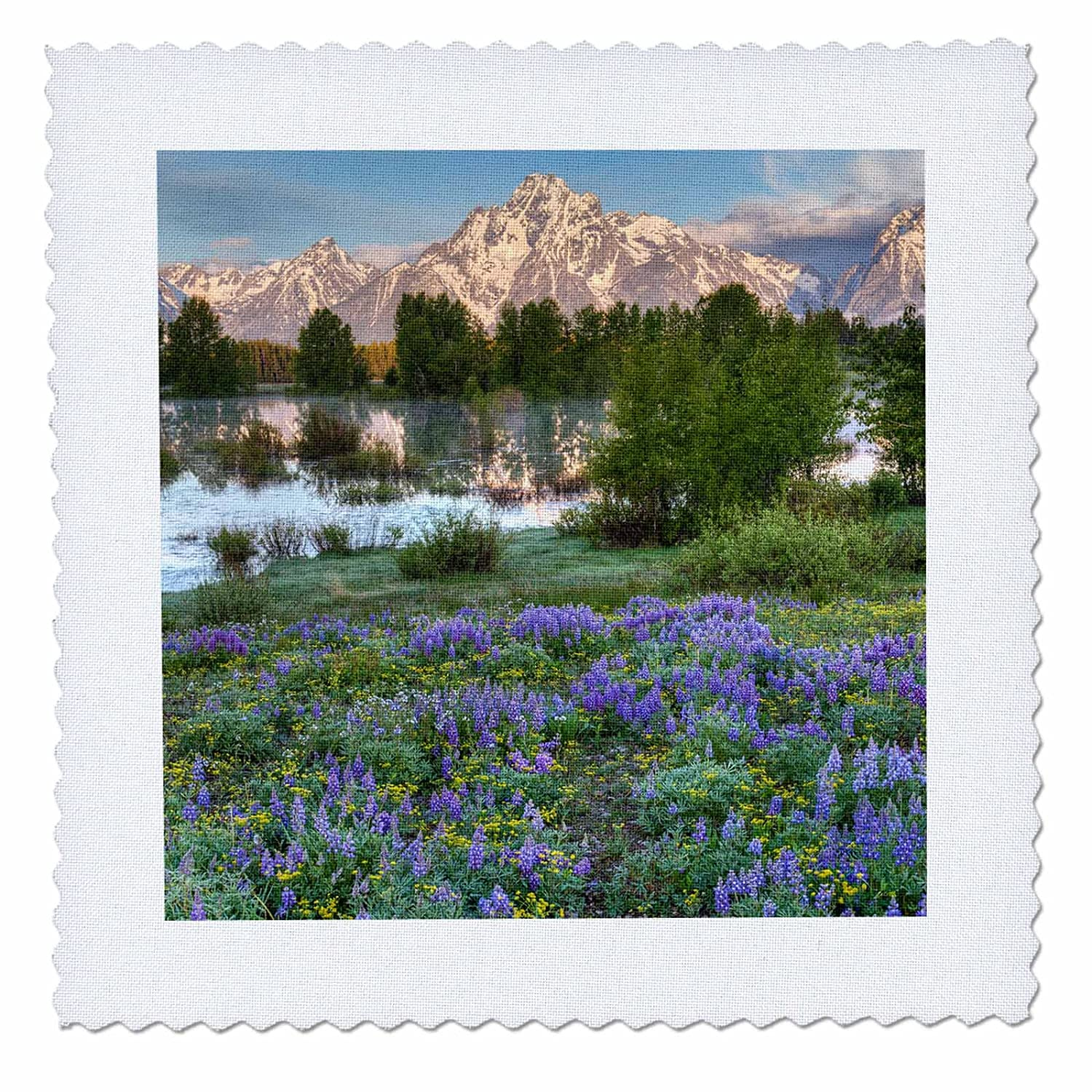 3dRose Danita Delimont USA Mountains flowers Wyoming Grand Teton National Park qs/_279811/_6 16x16 inch quilt square mountains