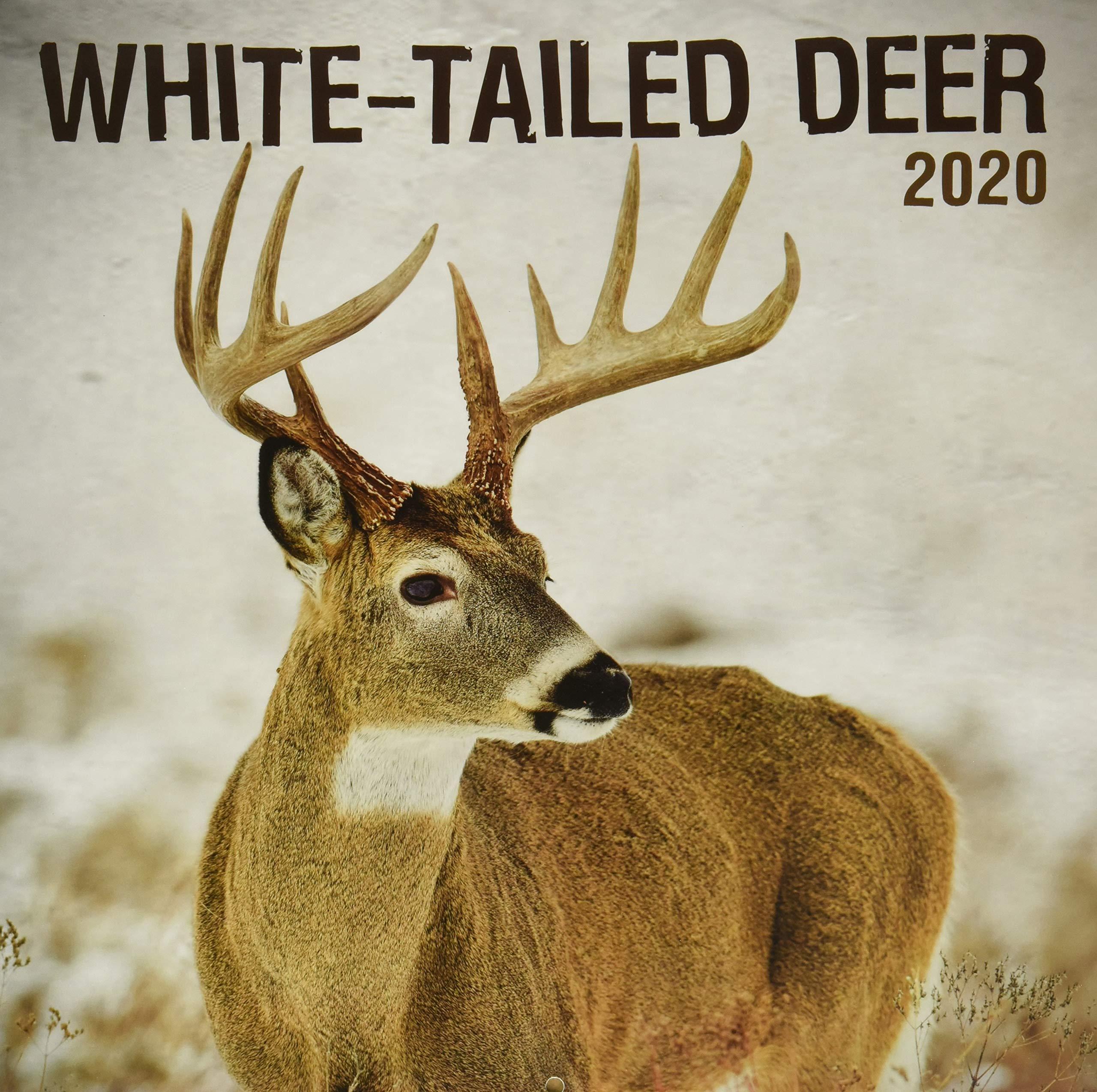 Deer Calendar 2020 White Tailed Deer 2020 Calendar: Inc. Lang Companies