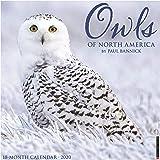 Owls 2020 Wall Calendar