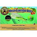 Green Lacewing 1,000 Eggs - NaturesGoodGuys
