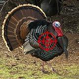 Turkey Hunter 2014