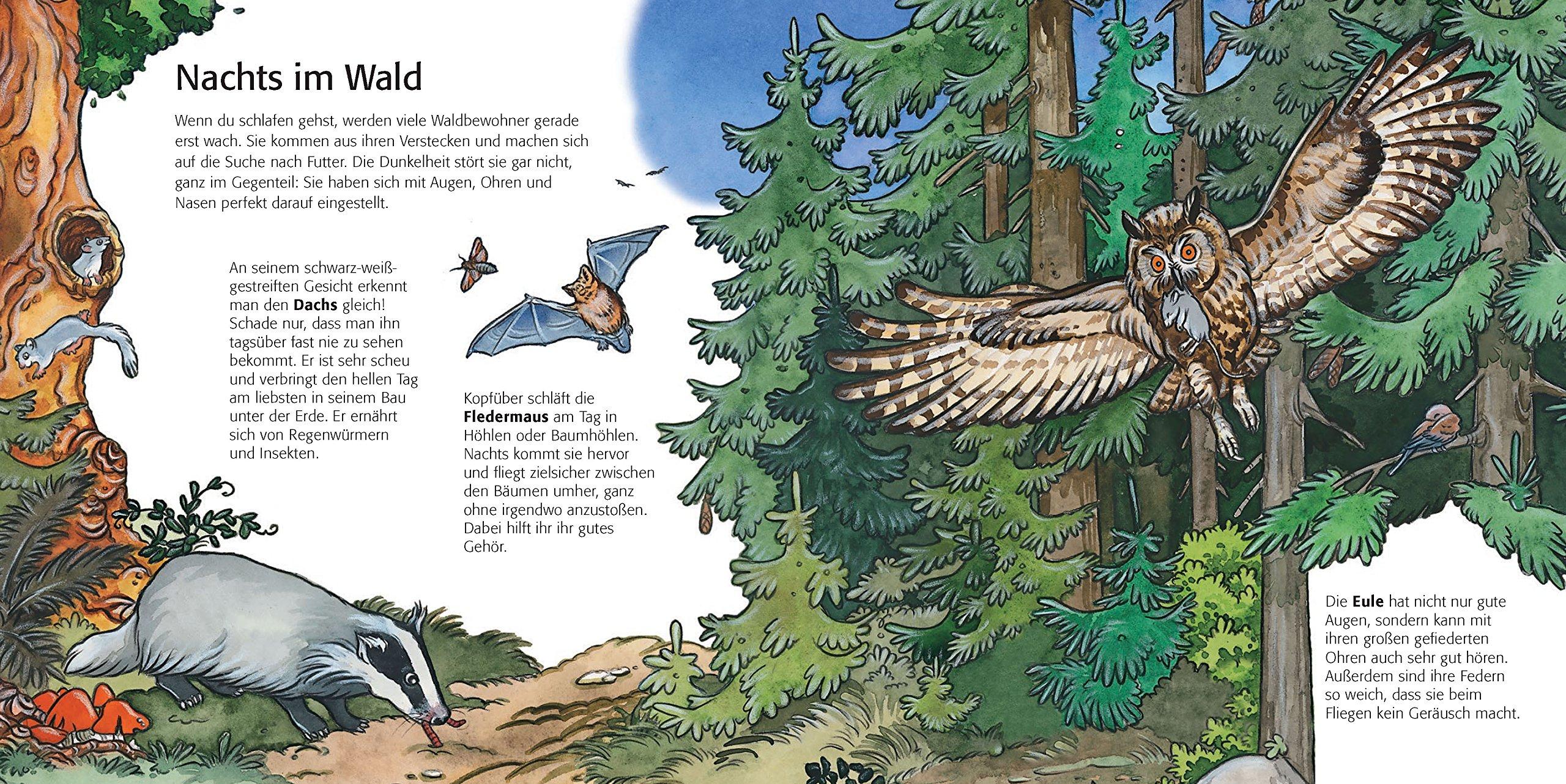 Kinder entdecken den Wald: Kinderwissen ab 3 Jahren: Amazon.de ...