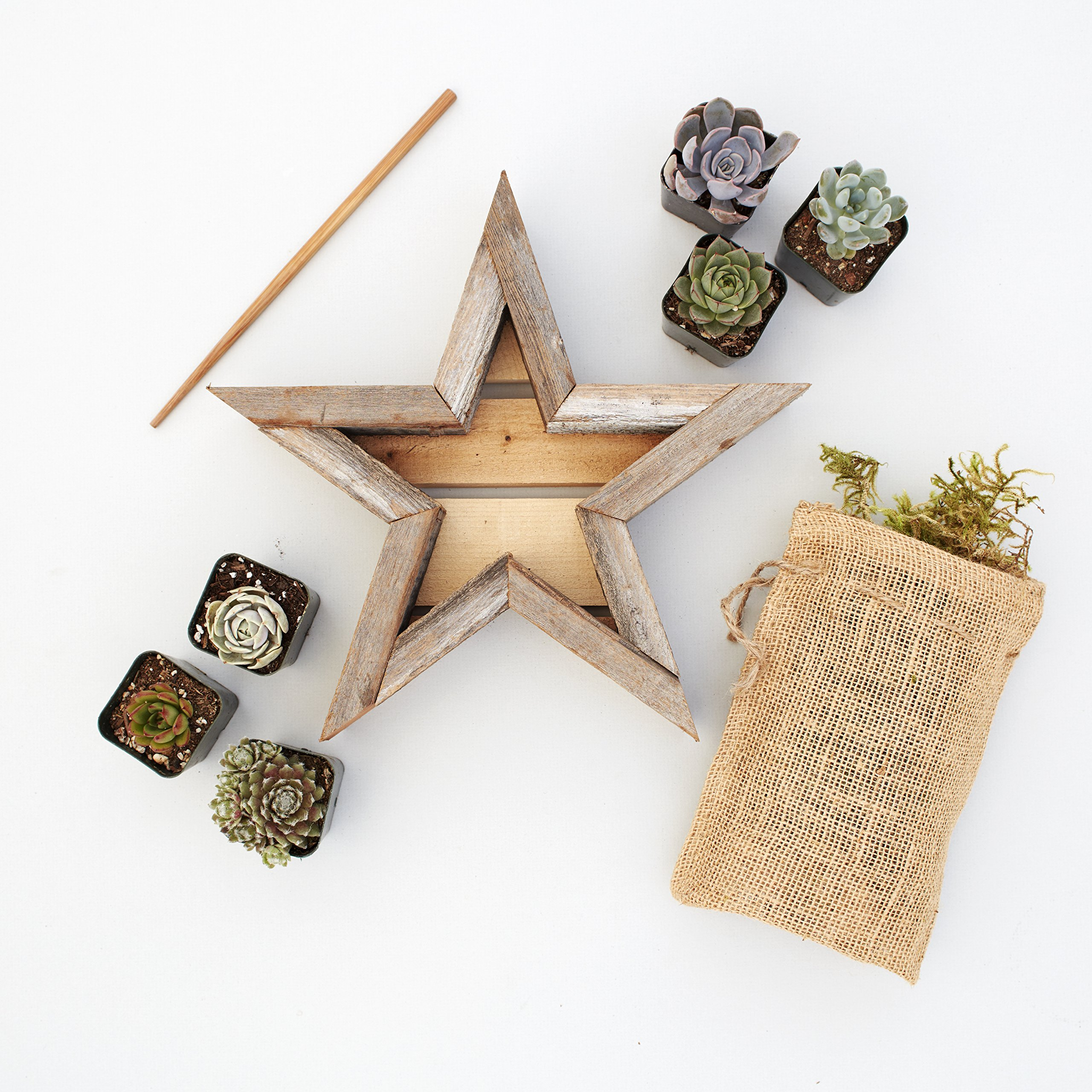 Succulent Gardens Small Succulent Star Planter Kit, 7'' Redwood Frame, Multicolor