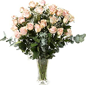 2 Dozen Pink Color Long Stem Roses (23.5 in), Beautiful Long-Lasting and Farm Direct Bouquet with White Fillers and Eucalyptus with Flower Food from Aquarossa Farms