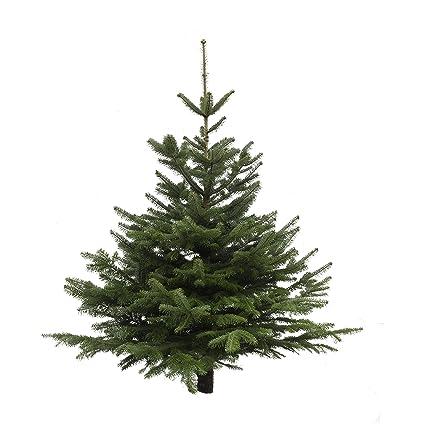 Foto Weihnachtsbaum.Echter Weihnachtsbaum Nordmanntanne Hohe Ca 125 150 Cm Frisch Geschlagen