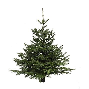 Wo Kommt Der Weihnachtsbaum Her.Echter Weihnachtsbaum Nordmanntanne Höhe Ca 125 150 Cm Frisch Geschlagen