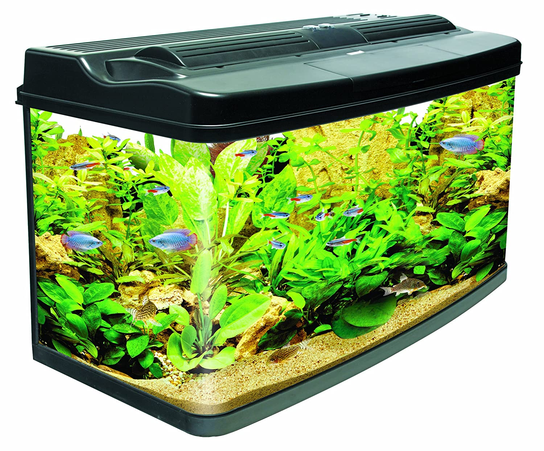 The aqua one 620 style fish tank aquatics world for Fish tank price