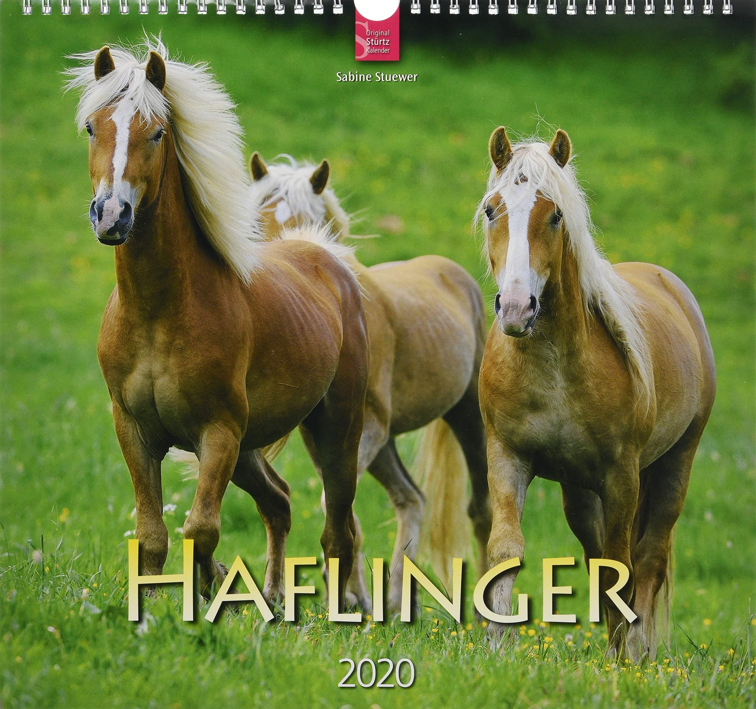 Haflinger  Original Stürtz Kalender 2020   Mittelformat Kalender 33 X 31 Cm