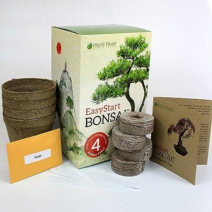 Amazon Com Easystart Bonsai Kit Everything Needed To Grow 4 Beautiful Bonsai Trees Garden Outdoor