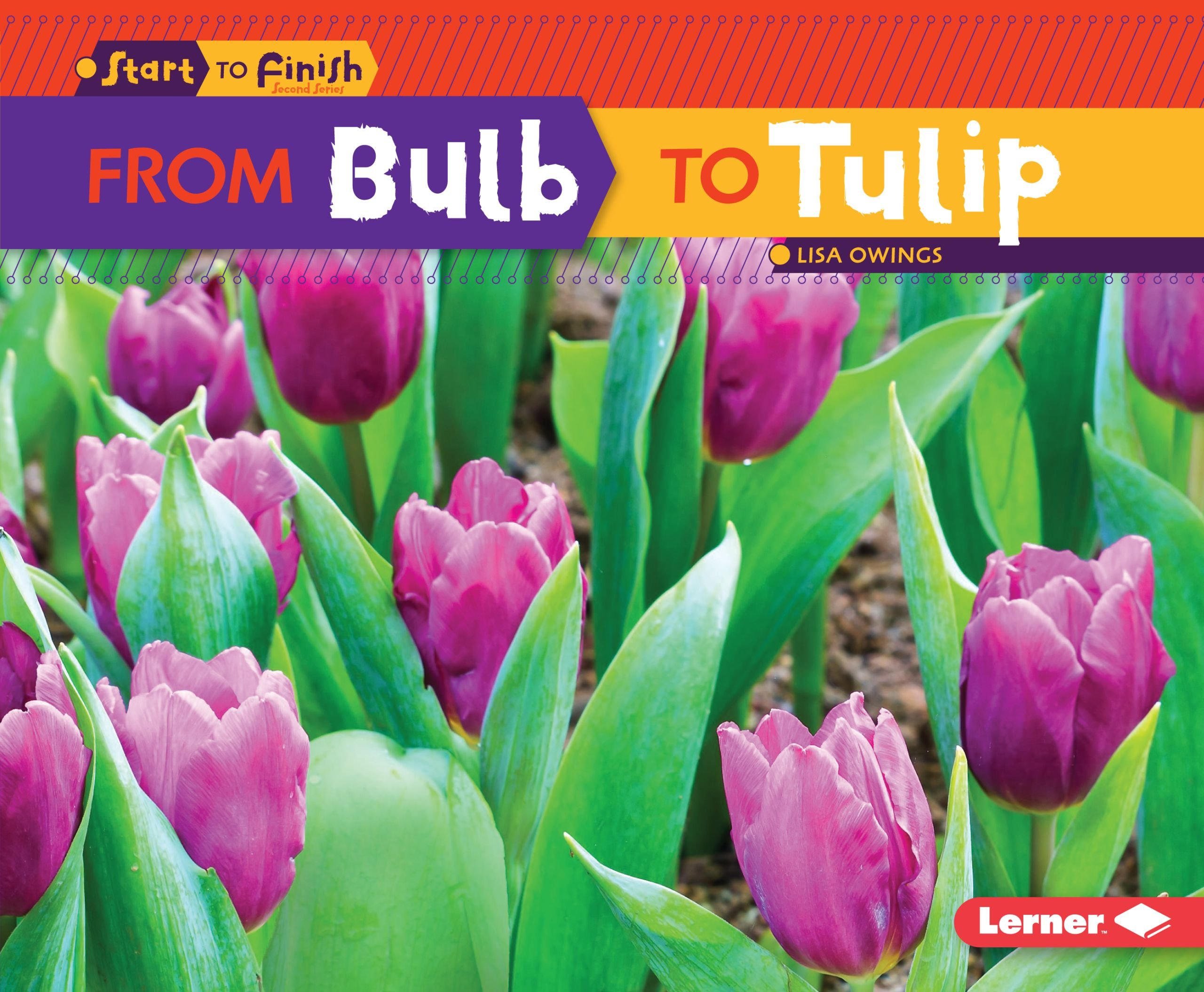 From Bulb to Tulip (Start to Finish, Second Series) by Lerner Publications TM