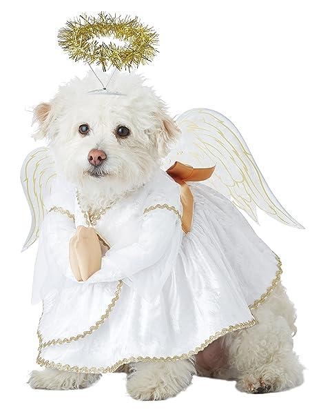 Amazon.com: california costumes Heavenly Hound perro disfraz ...