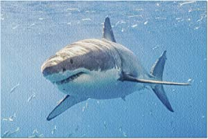 Great White Shark Swimming with Other Fish in Guadalupe Mexico 9004287 (Premium 1000 Piece Jigsaw Puzzle for Adults, 20x30, Made in USA!)