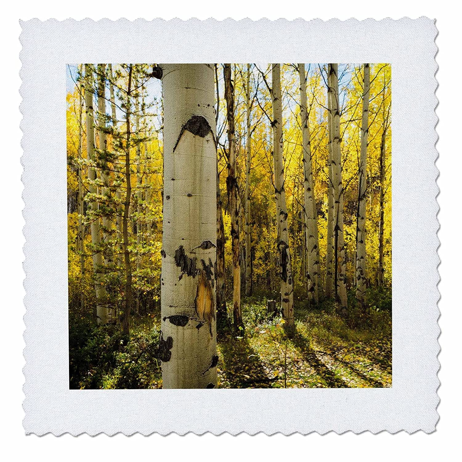 3D Rose Golden Quaking Aspen in Full Fall Color Kinney Creek Colorado Square 12 by 12 Inch Quilt 12 x 12
