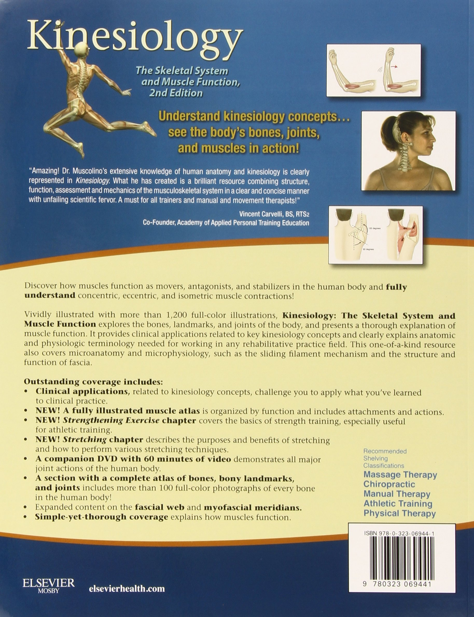 Kinesiology: The Skeletal System and Muscle Function, 2e: Amazon.co.uk:  Joseph E. Muscolino DC: 9780323069441: Books