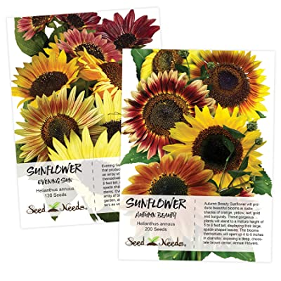Sunflower Seed Duo, Autumn Beauty & Evening Sun (Helianthus annuus) Seeds by Seed Needs : Garden & Outdoor