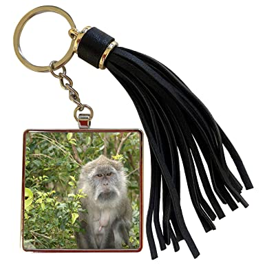 Amazon.com: 3dRose Danita Delimont - Monkeys - Mauritius ...