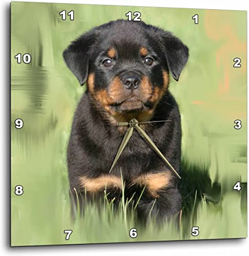 3dRose DPP_4372_2 Rottweiler Puppy Wall Clock, 13 by 13-Inch
