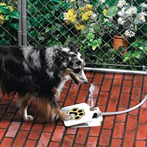 Dog Pet Water Fountain