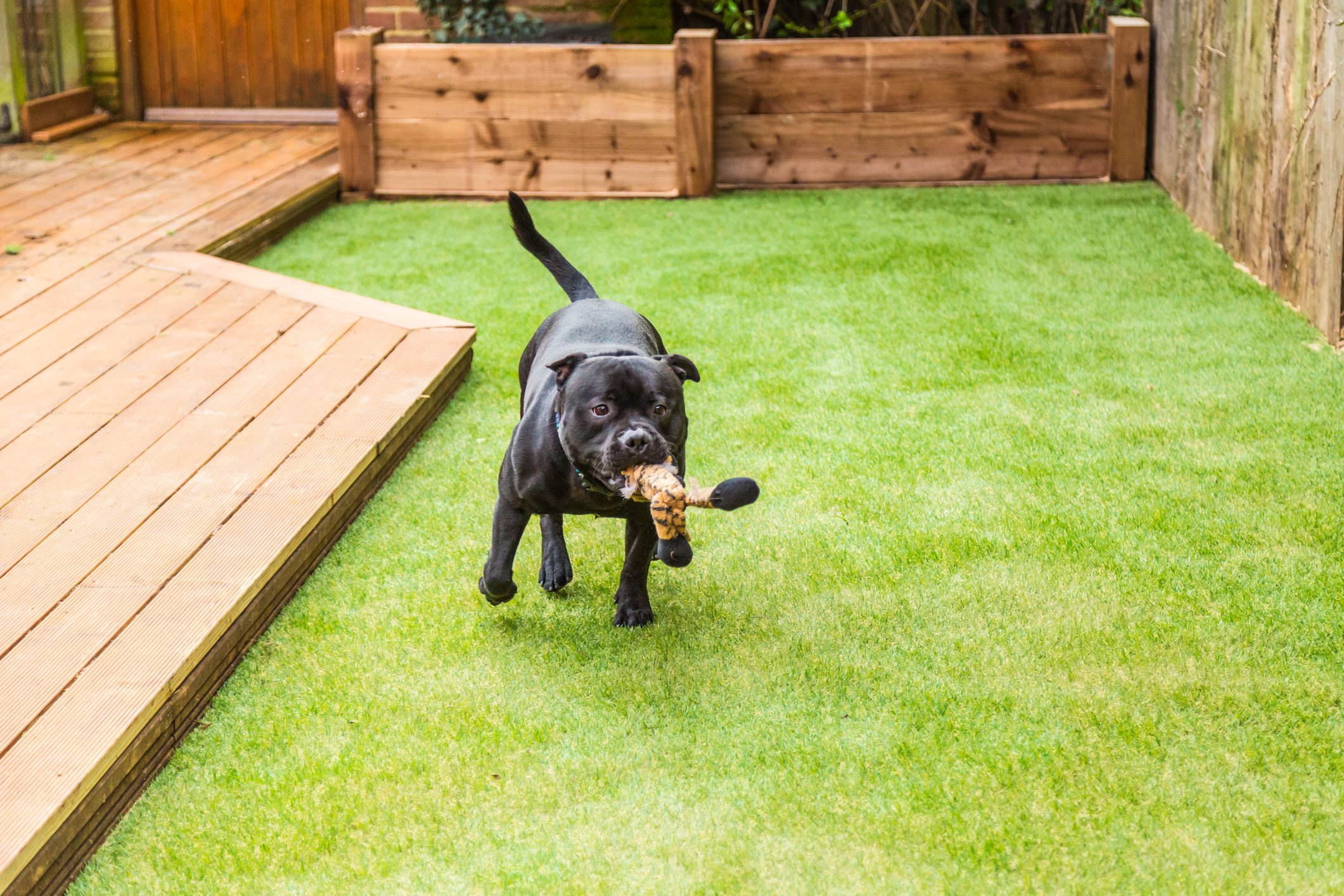 PZG 1-inch Artificial Grass Patch w/Drainage Holes & Rubber Backing | 4-Tone Realistic Synthetic Grass Mat | Heavy & Soft Pet Turf | Lead-Free Fake Grass for Dogs or Outdoor Decor | Size: 5' x 3'