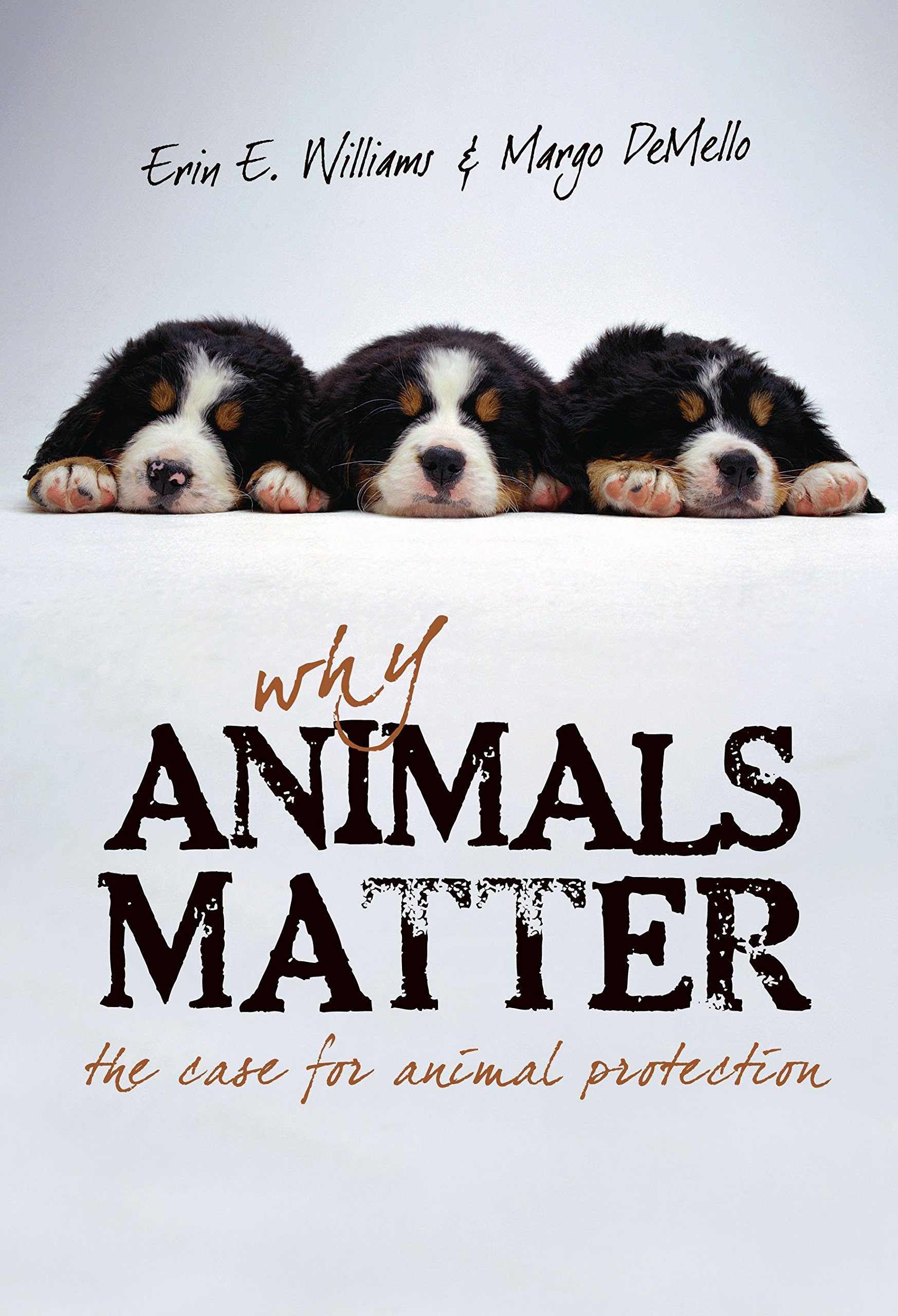 Why Animals Matter: The Case for Animal Protection PDF