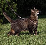 PetSafe Come With Me Kitty Harness and Bungee