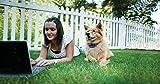 PetSafe Elite Little Dog Spray Bark Control for