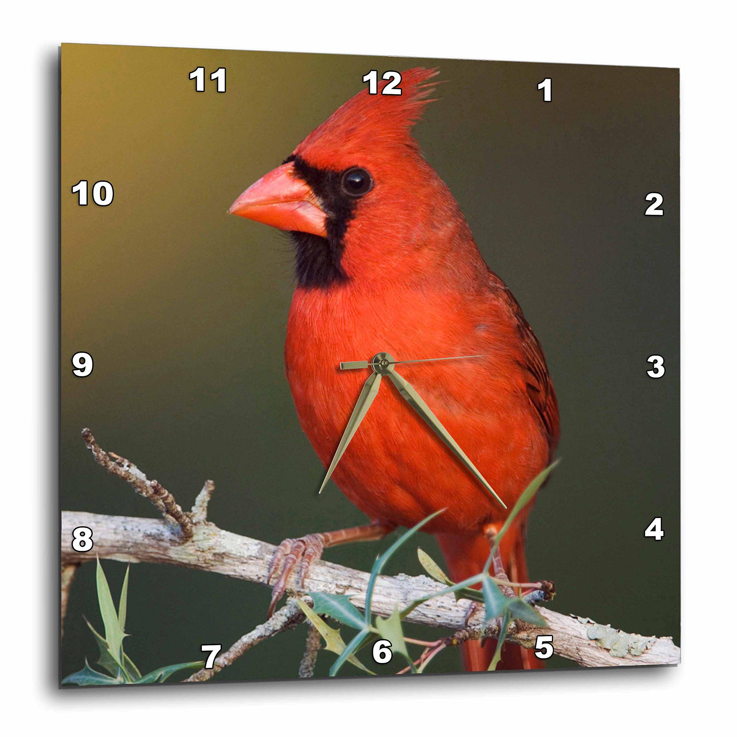 3dRose dpp_84317_1 Northern Cardinal bird, Hill Country, Texas - NA02 RNU0204 - Rolf Nussbaumer - Wall Clock, 10 by 10-Inch