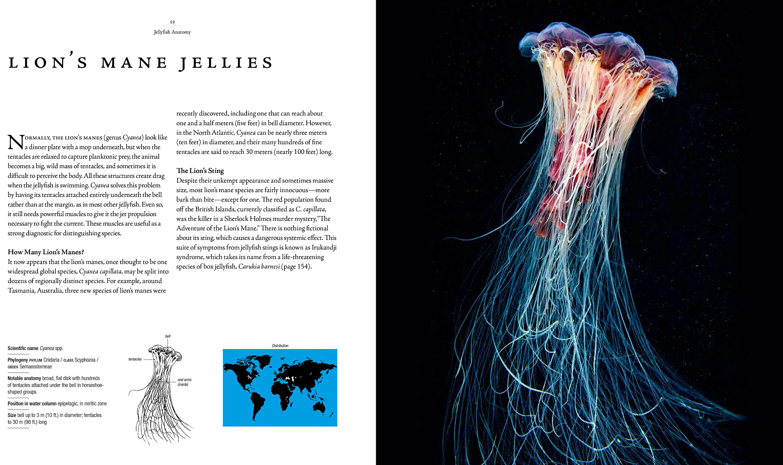 Jellyfish: A Natural History: Amazon.co.uk: Lisa-Ann Gershwin ...
