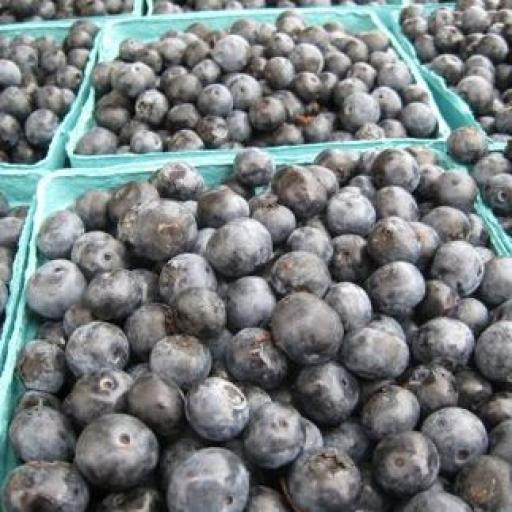 jd-blueberry-farm