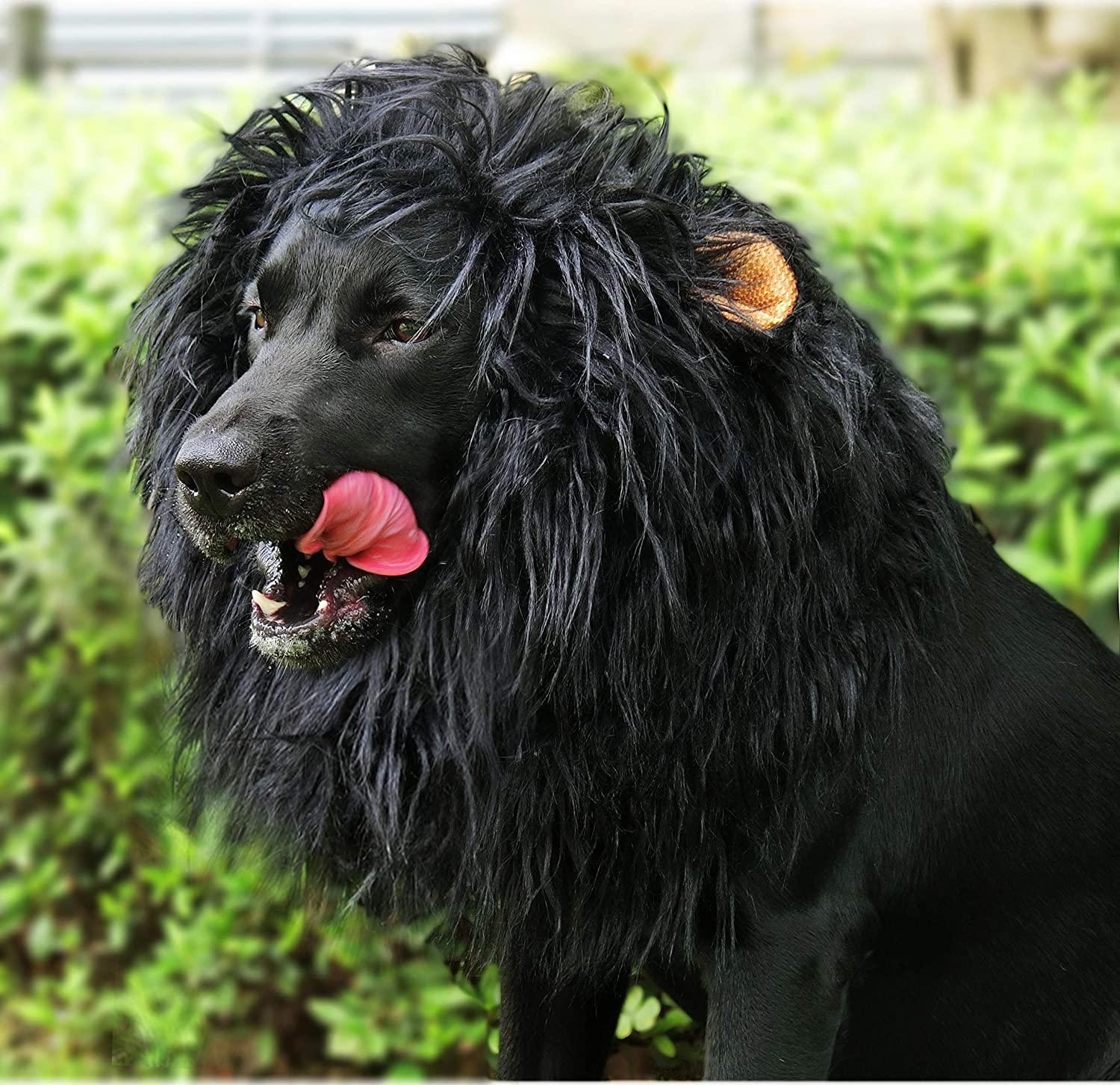 Amazon Com Onmygogo Lion Mane Wig For Dogs With Ears Funny Pet Costumes For Halloween Christmas Size L Black Pet Supplies