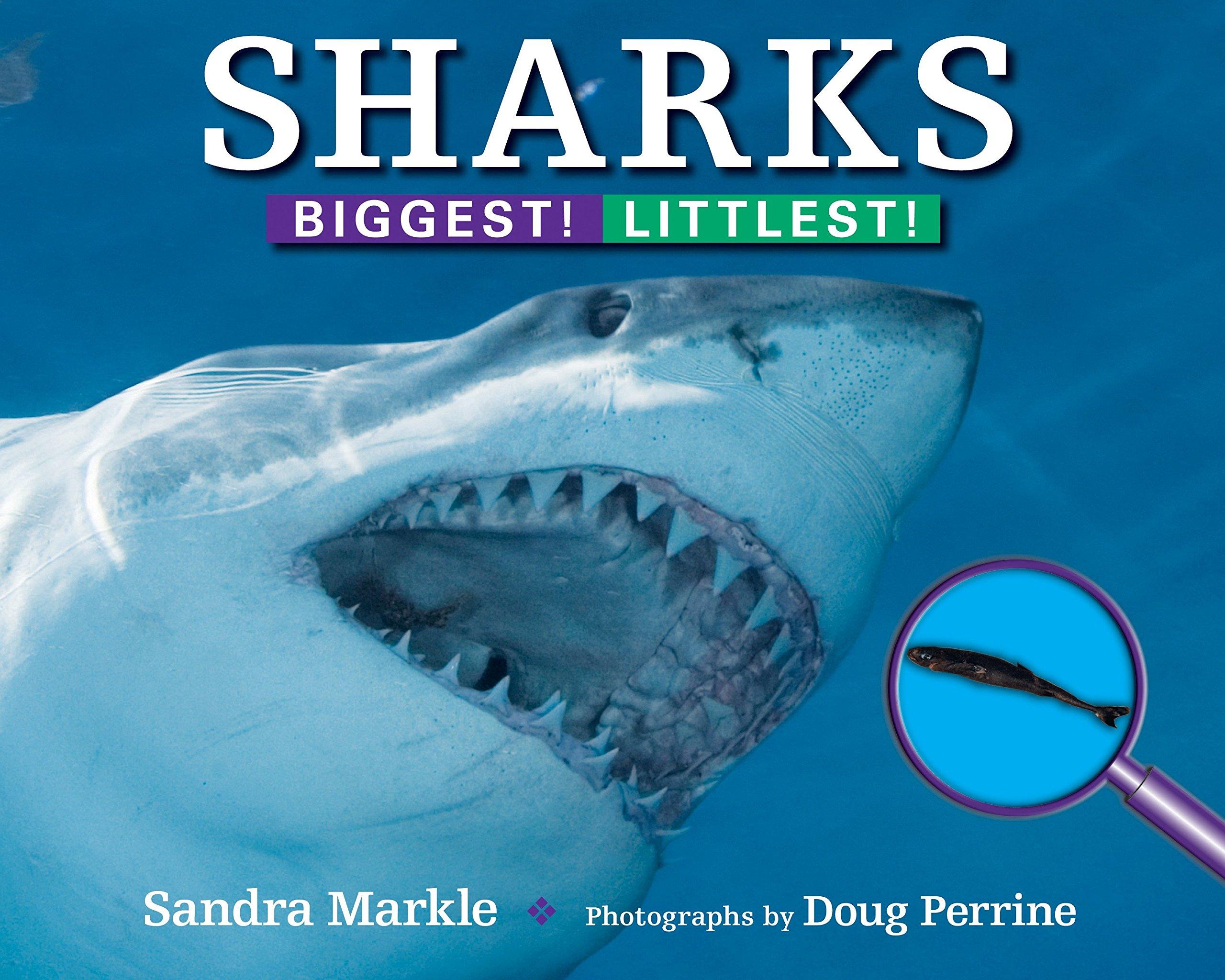 Sharks: Biggest! Littlest!