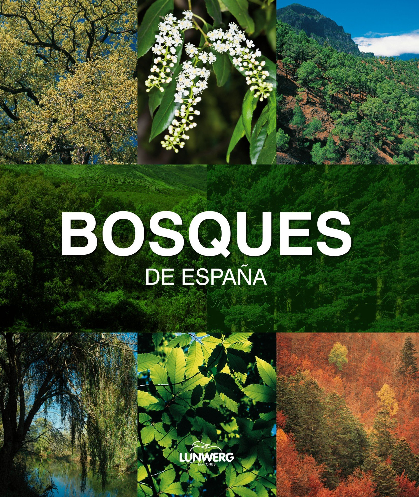 Bosques de España. Lunwerg Medium: Amazon.es: Araújo, Joaquín: Libros