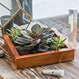 Wall Mount Air Plant Holder - Made