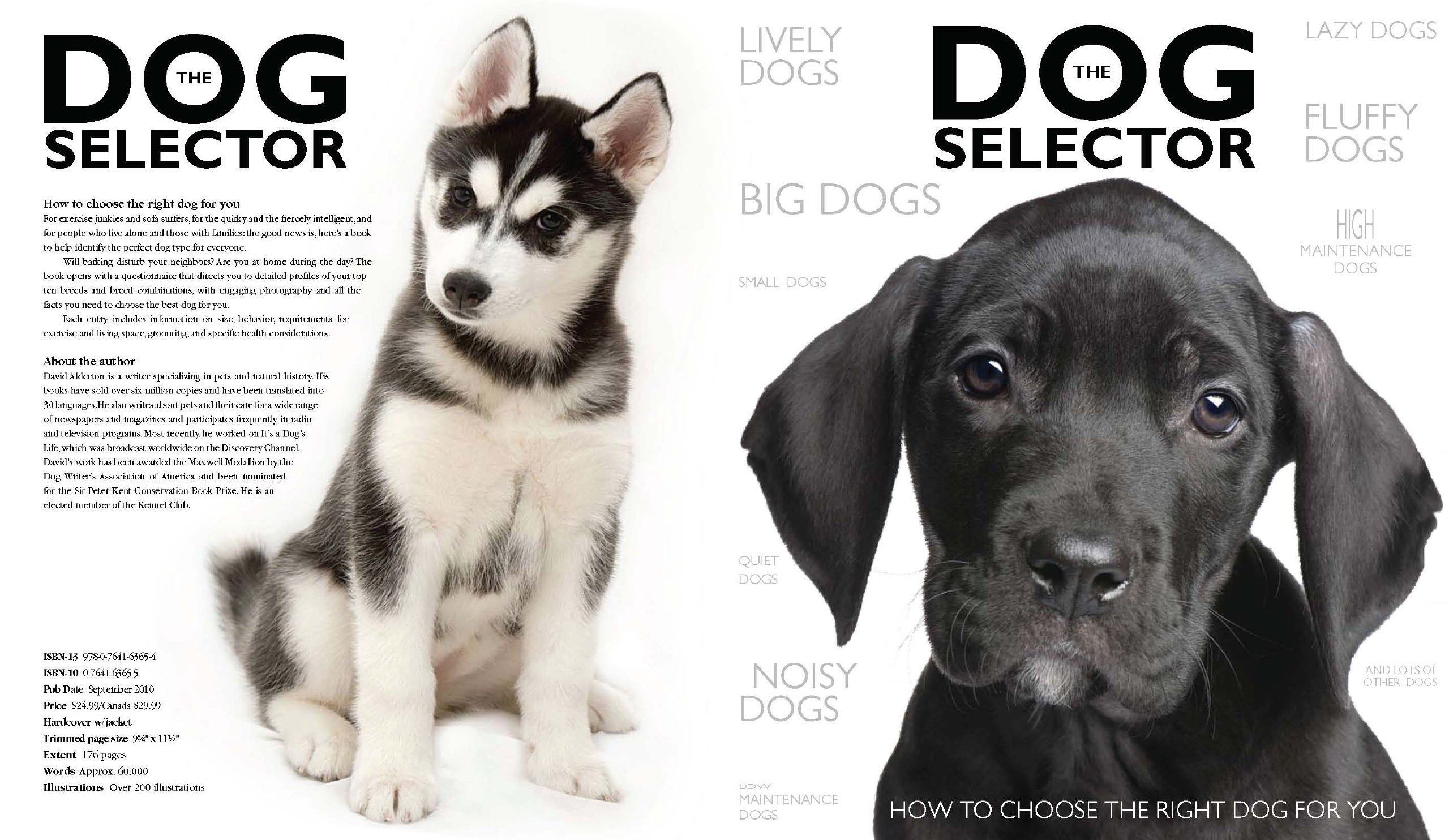 How to Choose the Right Breed of Dog images