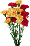 Fourwalls Single Carnation (Set of 15, Red and Yellow)