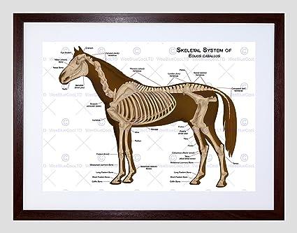 Amazon Animals Skeleton Bones Horse Anatomy Framed Art Print