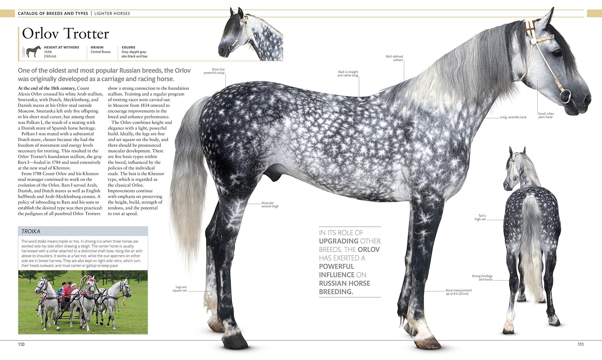 The Horse Encyclopedia: Elwyn Hartley Edwards: 9781465451439: Amazon.com:  Books