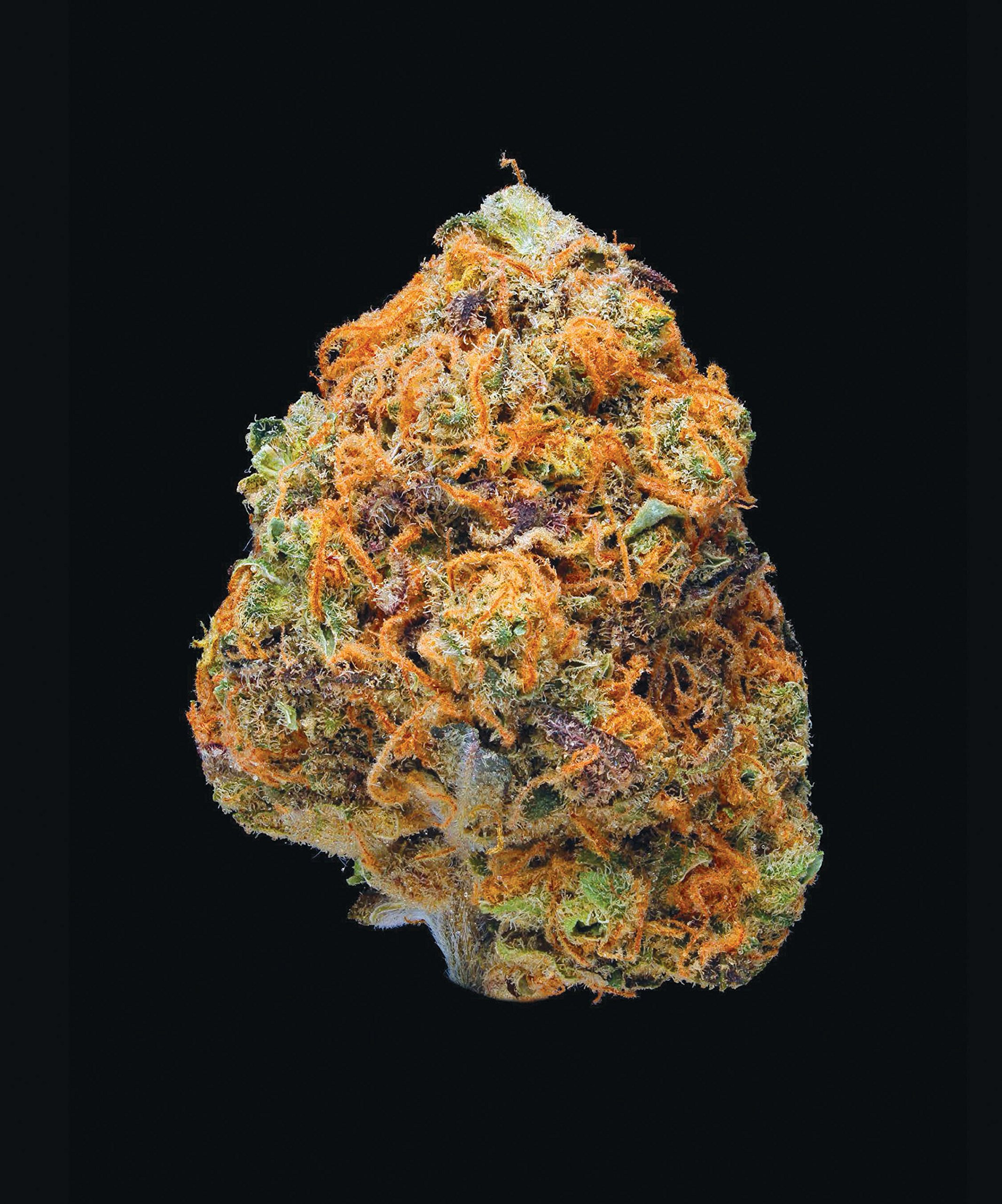 Green A Field Guide to Marijuana Dan Michaels Erik Christiansen