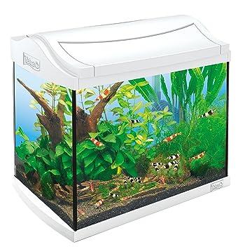 Tetra 211957 White Edition AquaArt - Juego completo de camarones para acuario (20 L, ideal para mantener y cría la camaroneta): Amazon.es: Productos para ...