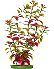 Marina Aquascaper Red Ludwigia Large Plant, 12-Inch