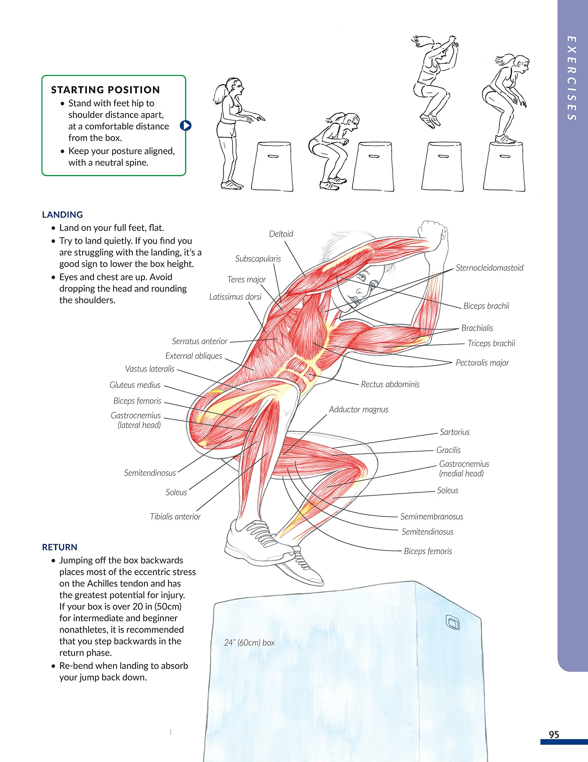 New Anatomy for Strength & Fitness Training: An Illustrated Guide to Your  Muscles in Action Including Exercises Used in CrossFit(r), P90X(r), ...