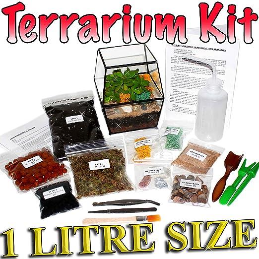 Kit de terrario, con guía paso a paso (idioma español no ...