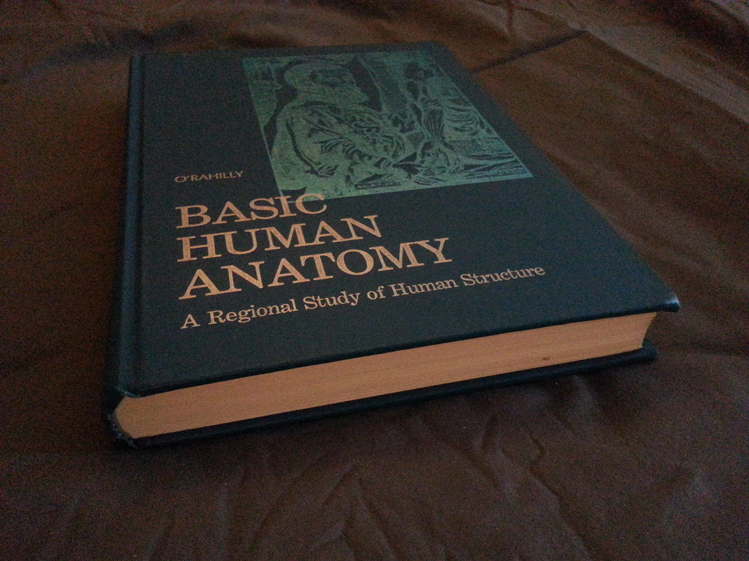Basic Human Anatomy Regional Study Of Human Structure Amazon