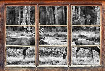 Monocrome Hirschfamilie Auf Herbstlicher Waldlichtung Fenster Im 3d