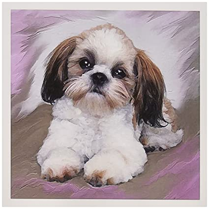 Amazoncom 3drose Shih Tzu Puppy Greeting Cards 6 X 6 Inches